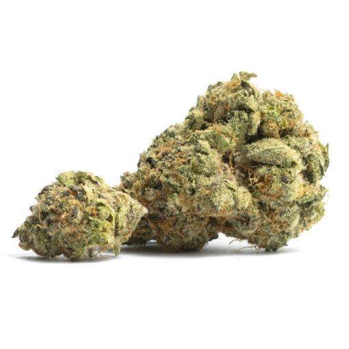 Orange Juice Strain - My Weed Center