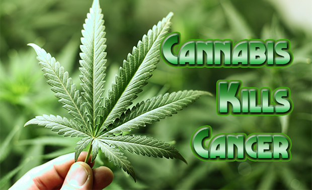 medicinal cannabis kills cancer